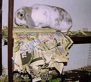 speelgoed voor konijnen